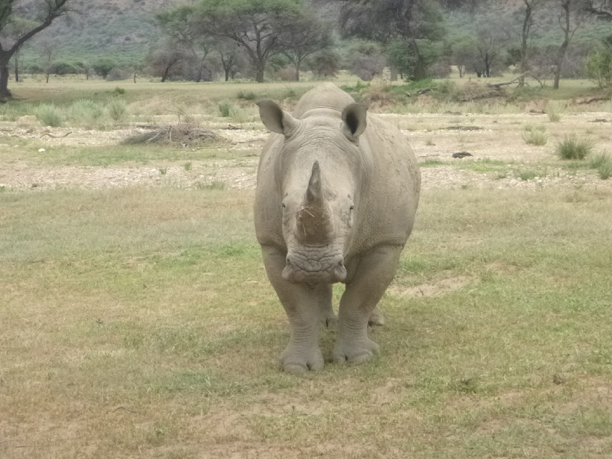 Rhino サイ