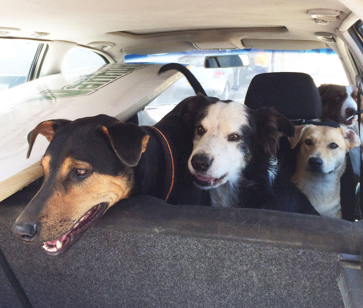 犬たちとサーフィンへ
