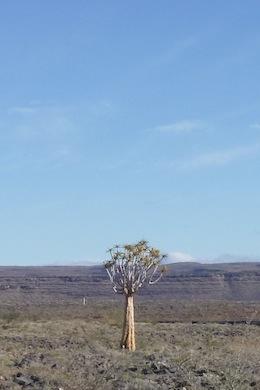 ナミビアの気候