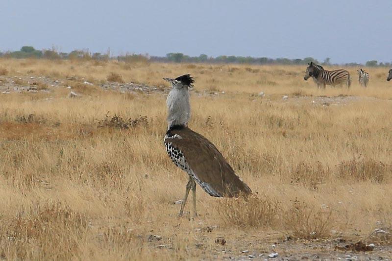 野生動物 -Etosha National Park
