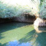 ぶどう畑へは、湧き水の池から水を引いています。