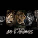 BIG5 ビッグ5 アフリカ